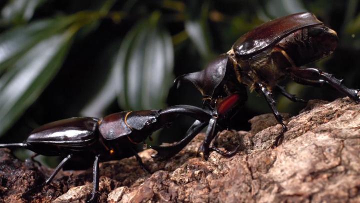 昆虫の驚異の生態をとらえた『アリのままでいたい』をTV初放送!!【夏休みキッズスペシャル】